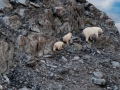 labrador-torngat-mountains-3-polar-bears-copyright-barrett-mackay-photo